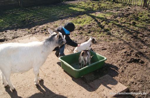 Jano mit Ziegennachwuchs