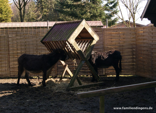 Esel im Tiergarten