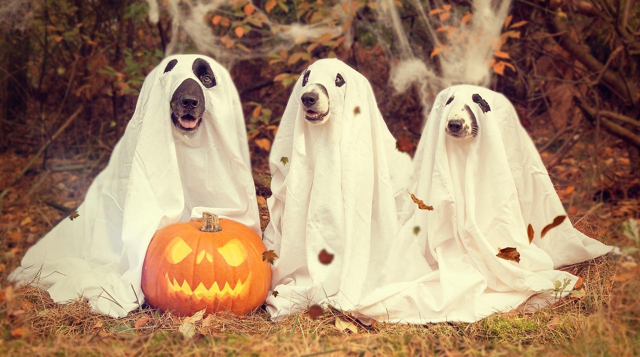 Halloween Kostüm Selber Basteln